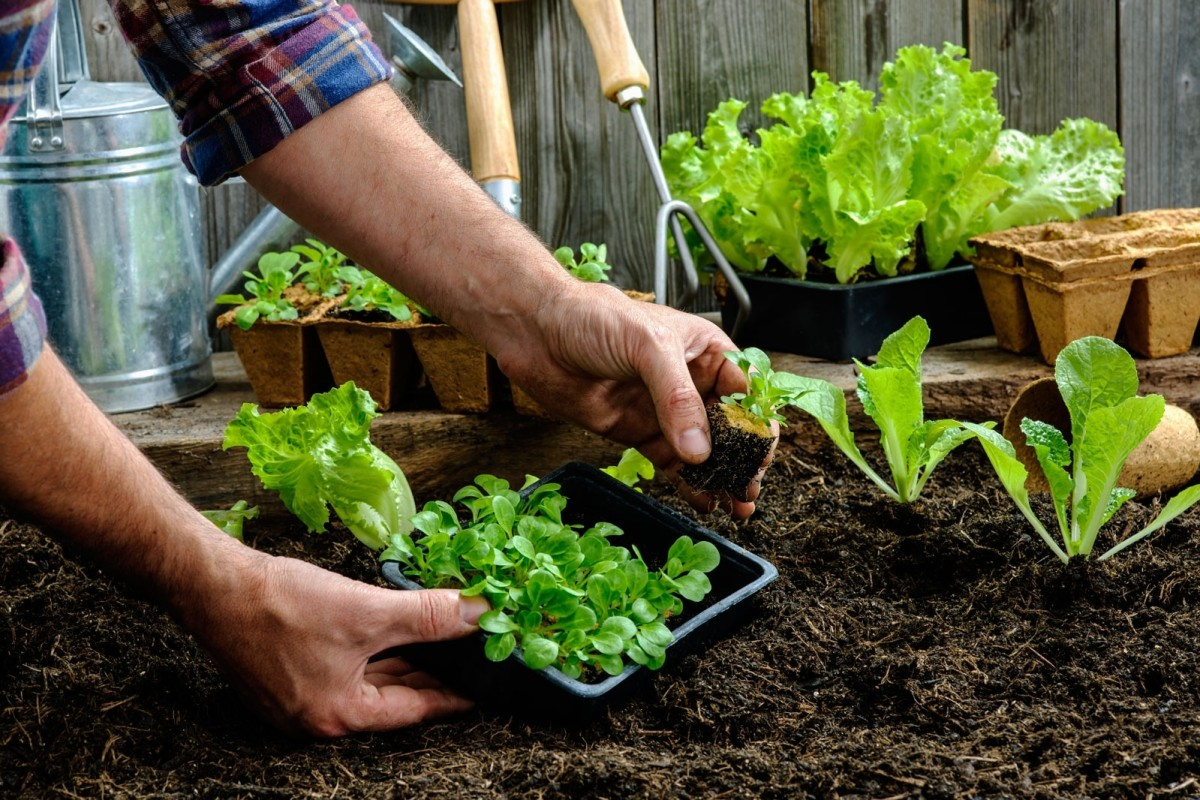 Best Gardening Tips for Novices